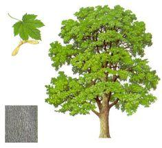 Listnaté stromy | 75. zbor