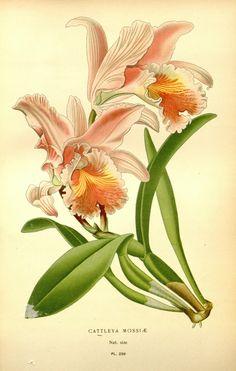 v. 4 - flores favoritas de jardín y de efecto invernadero / - Biodiversity Heritage Library