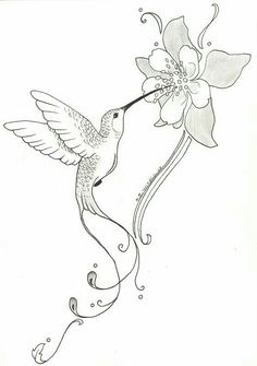 Stylized Drawing Of A Hummingbird Drinking From Flowers Pencil