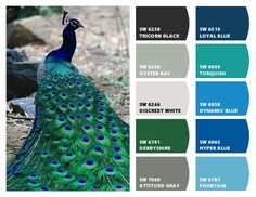 Peacock Hues.... Paint colors from Chip It! by Sherwin-Williams