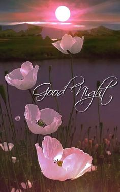 Good Night – Good Night Flowers Wallpapers – Good Night Image – Good Night Status – Good Night Wallpaper – Good Night pics – Beautiful Good Night Images – Best Good Night Images – Good Night Image With Flowers Beautiful Good Night Images, Good Night Images Hd, Good Night Prayer, Good Night I Love You, Good Night Friends, Good Night Blessings, Good Night Gif, Good Night Wishes, Night Pictures