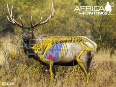 elk-vitals-bowhunting.jpg Photo by waiting4fall | Photobucket