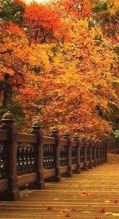 ♥ Shades of Autumn bela incrível