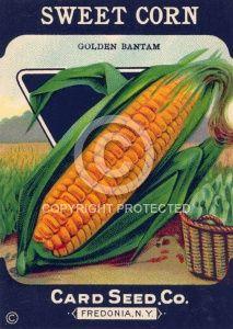 Vintage Seed Packet Label - Sweet Corn
