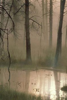 Taking a walk among the haunting spirits, that's what fog reminds of