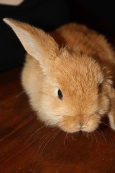 Helicopter Bun Keeps One Ear Up - August 22, 2011