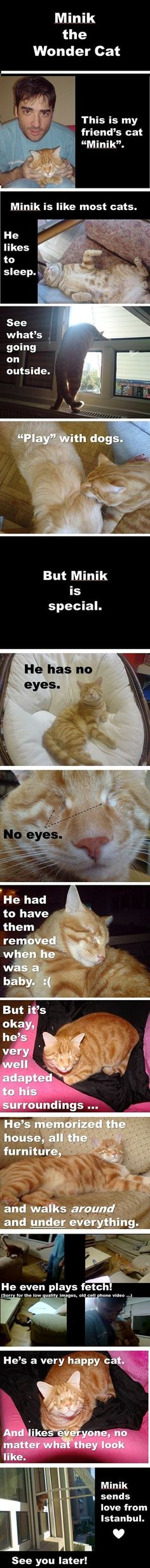Minik the Wonder Cat. Cute story!
