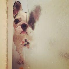 French Bulldog in the Shower, via Batpig & Me Tumble It