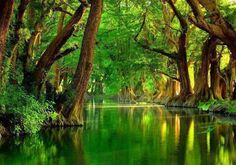 Green River Banks Mexico ♥ | Most Beautiful Pages