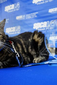 Cat That Gained Viral Fame After Saving Young Boy Wins Hero Dog Award