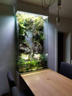 42 Astonishing Aquarium Design Ideas For Indoor Decorations - An aquarium is an enclosure with at least one clear side that houses water-dwelling fish, plants and other livestock and decorations. An aquarium offe. Aquascaping, Aquarium Aquascape, Aquarium Terrarium, Aquarium Landscape, Reptile Terrarium, Nature Aquarium, Terrarium Plants, Aquarium In Wall, Aquarium Garden