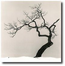 Beautiful Black and White Photos of a Sideways Japanese Tree by Michael Kenna - My Modern Metropolis Black And White Tree, Black And White Landscape, Japanese Tree, Tree Study, Arbour Day, Tree Silhouette, Tree Art, Artist At Work, Belle Photo