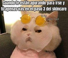 Gatos Cool, Mirrored Sunglasses, Mens Sunglasses, Skin Care, Instagram, Cats, Memes, Kitty, Gatos