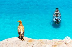 """Interesting in """"Photo"""" ⭐ Off the coast of Yemen, in the Arabian Sea, lies isolated Socotra Island, where hundreds of plants and animals have developed into species unique to the Socotra, Arabian Sea, Photography Tours, Archipelago, Beautiful Places, Scenery, Coast, Travel, Animals"""