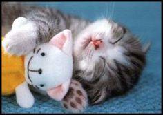 Need my teddy bear to sleep - sleepy Cat