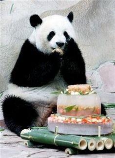Puppy cake, Puppy dog cakes and Dog cakes on Pinterest