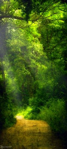 A walk in the woods would be nice!