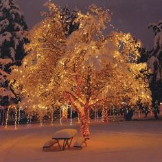 Happy #boxingday everybody!! #christmastime #winterwonderland #winter #lights #beautiful #magical #snow #forrest #scenery