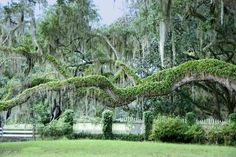 Seabrook Plantation located on Edisto Island outside Charleston County South Carolina.