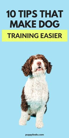 Dog training can be tough, and it's something all of us have struggled with at one time or another. But there are some pretty simple ways to make it easier. Here's some of my favorite training tips to help you out. From being consistent with rules to know Pet Care Tips, Dog Care, Puppy Care, Best Dog Training, Training Tips, Brain Training, Asian Dogs, Tortoise As Pets, Cool Dog Houses
