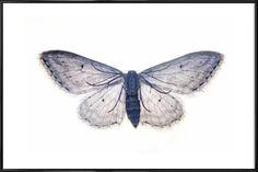 Butterfly in Blue - cafelab - Poster in kunststof lijst
