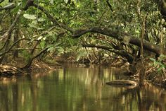 Kuruva dweep is one of the main tourist spot in Wayanad district, Kerala. It's located in 17 km from the east of Mananthavady and 40 km to the north of Sulthan Bathery. Kuruva dweep is covered by islets of water, which forms one of the tributaries of Kabani River. It is famous for Kerala trip packages because it covers with 950 acres of evergreen forest, which is rich in flora and fauna. Also another main attraction of Kuruva dweep is boating on the river which keeps the visitors on the…