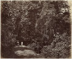 Samuel Bourne | Twee mannen op een bospad in India, Samuel Bourne, 1862 - 1874 |