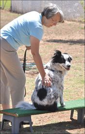 The Tellington TTouch For Dogs - Whole Dog Journal Article