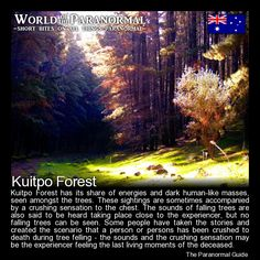 Kuitpo Forest - South East of Adelaide, South Australia - 'World of the Paranormal' are short bite sized posts covering paranormal locations, events, personalities and objects from all across the globe. Spooky Stories, Ghost Stories, Horror Stories, Real Haunted Houses, Most Haunted, Scary Places, Haunted Places, Creepy Things, Creepy Stuff