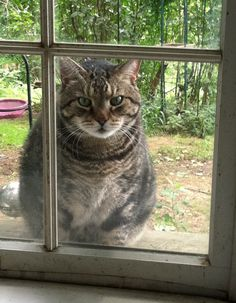 Mad cat wants in