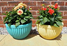 Revamp of Flower Pots in Turquoise & Mustard. Yes, the chalk paint can be used outdoors Flower Pots, Flowers, Paint Cans, Apartment Living, Chalk Paint, Summer Time, Mustard, Planter Pots, June