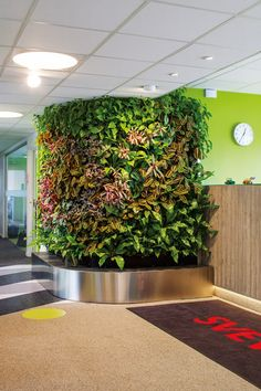 Indoor Plant Walls by Greenworks Wall Plant Pot, Indoor Plant Wall, Indoor Plants Clean Air, Indoor Plants Low Light, Apartment Herb Gardens, Video Wall, Flower Lights, Water Plants, Wall Design