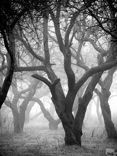 The Best of Russia 2012 photography competition winners. The Mystic Forest, by Alexei Averyanov, Rostov-on-Don