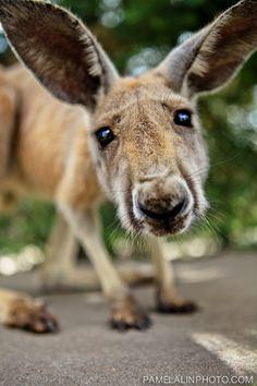 Take moo to Caversham Wildlife Park *Done* Rare Animals, Animals And Pets, Strange Animals, Reptiles, Mammals, Planeta Animal, Wildlife Park, All Nature, Amazing Nature