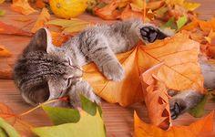 Kitteh bite.....A taste of autumn by =hoschie