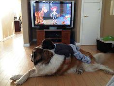 Now THAT'S a Bark-A-Lounger! - Funny pictures and memes of dogs doing and implying things. If you thought you couldn't possible love dogs anymore, this might prove you wrong. Dogs And Kids, Big Dogs, I Love Dogs, Cute Dogs, Dogs And Puppies, Doggies, Funny Dogs, Funny Animals, Cute Animals