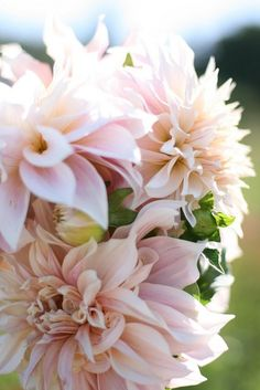 cafe au lait Dahlias - for centerpieces only. Not good for bouquets or cakes (they do not do well out of water)