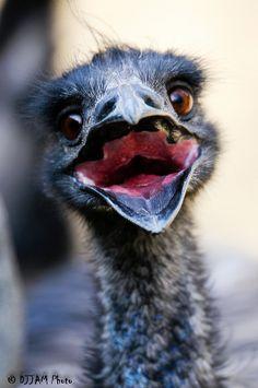 #emu #animals #wildanimals   http://www.animalsafari.com/Georgia/