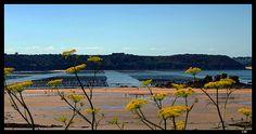 bouchots de la baie de l'arguenon - Saint-Jacut-de-la-Mer, Bretagne