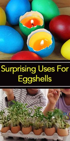 If you used to throw away the eggshells until now, you might want to reconsider. Here are 16 of the most common and efficient uses of eggshells. [LEARN MORE]