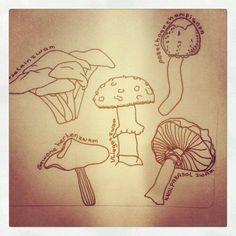 Schets van paddestoelen. Sketch of mushrooms
