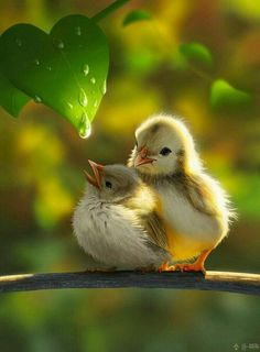Looking for for images for good morning images?Check out the post right here for cool good morning images inspiration. These hilarious images will make you happy. Cute Birds, Pretty Birds, Beautiful Birds, Animals Beautiful, Wonderful Flowers, Nature Animals, Animals And Pets, Cute Baby Animals, Funny Animals