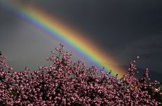 A rainbow glows in the sky behind trees in blossom over the city of GenevaPhotograph: Fabrice Coffrini/AFP/Getty Images