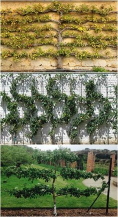 Espalier is an ancient art of cultivating a tree's branches into a certain pattern or design. Here's how to incorporate it into your garden.