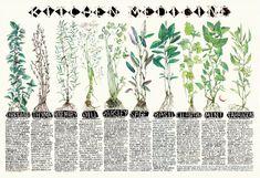 Medicinal Qualities of Kitchen Herbs | Chelsea Granger Art via Etsy