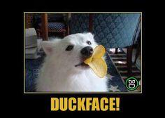 Hai proprio la faccia da...  #bastardidentro #cane #patatine #papero