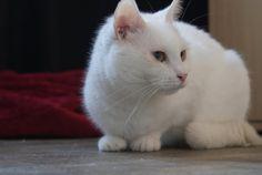 vccxvx Education Canine, Cats, Dog, Animaux, Gatos, Cat, Kitty, Kitty Cats