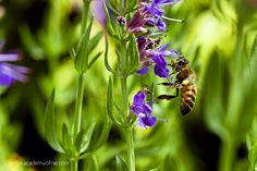 If you've been interested in organic gardening but are wondering what to do about pests, consider planting herbs! Many herbs encourage biodiversity and attract the beneficial insects that keep pest...