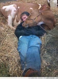 Mira qué buena almohada me he buscado