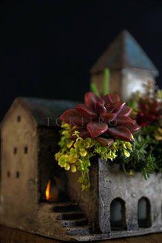 succulent plants in house planter